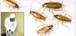 Dettagli sul trattamento dei locali da vari insetti: sfumature importanti