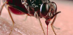 A proposito di punture di insetti e loro trattamento