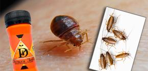 Rimedio per cimici e scarafaggi Delta Zone: descrizione e recensioni