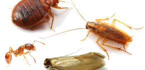 Come combattere gli insetti domestici nell'appartamento