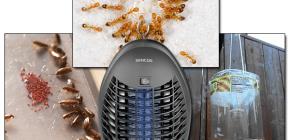 Revisione di trappole efficaci per insetti volanti e striscianti