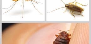 Insetticidi repellenti per insetti in casa: una rassegna di farmaci