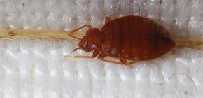 Bug di mobili (sono letti)