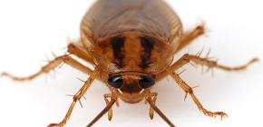 Foto di vari scarafaggi