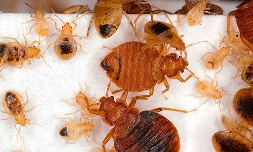 Metodi che aiutano a distruggere completamente i bug nell'appartamento ...