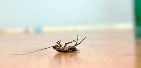 Scegliere un veleno efficace per gli scarafaggi