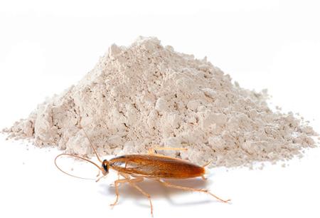 Polveri per uccidere gli scarafaggi: revisione dei rimedi efficaci