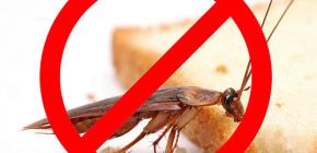 La distruzione degli insetti: consigli utili e sfumature importanti