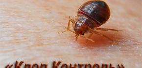 Servizio di controllo dei parassiti Controllo del cimice e caratteristiche del suo lavoro