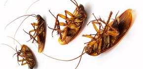 Trame contro gli scarafaggi