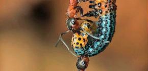 Quanto pesa una formica e quanto peso può sollevare