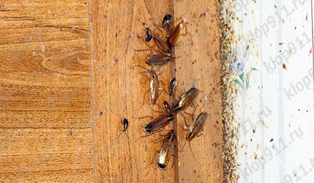 Batteri sulle zampe di scarafaggio