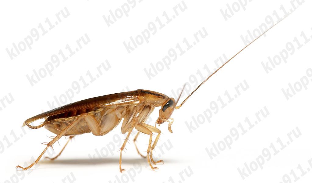 Lo scarafaggio ha perso i baffi