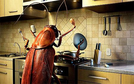 La pulizia in cucina e nell'appartamento nel suo insieme è la chiave per una lotta di successo contro gli scarafaggi