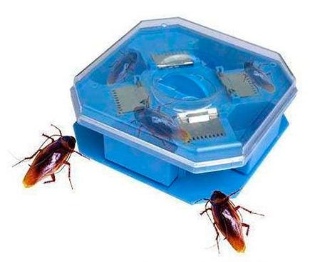 Trappola scarafaggio