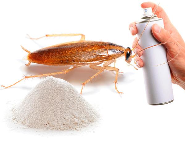 Scegliere un rimedio per gli scarafaggi nell'appartamento ...