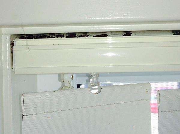 Lo spray insetticida entra facilmente anche in luoghi remoti, dove gli scarafaggi si nascondono spesso.