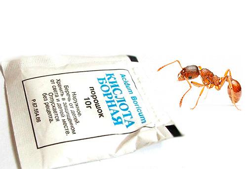 L'acido borico è un rimedio popolare efficace per sbarazzarsi delle formiche domestiche.