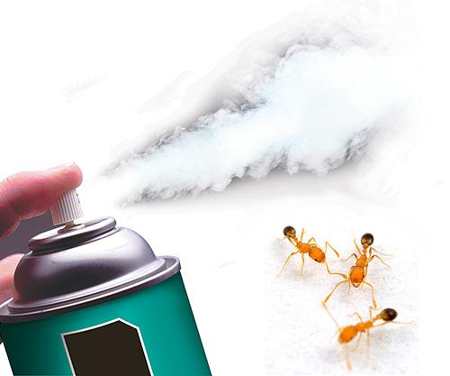 Oggi ci sono aerosol insetticidi altamente efficaci che distruggono rapidamente le formiche.