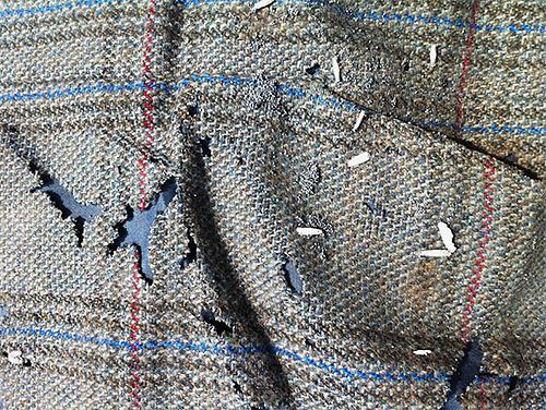 Ogni larva di falena è un nuovo buco sul tuo maglione o soprabito preferito