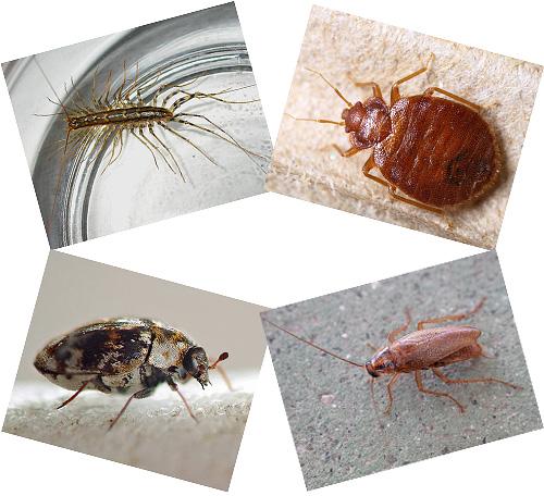 Nella casa accanto a una persona possono vivere molti insetti, di cui parleremo ulteriormente, con fotografie, una descrizione del modo di vivere e le conseguenze del vicinato con loro.