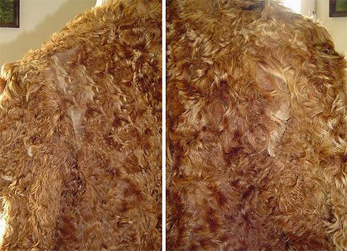 La falena che vive in casa può causare danni significativi ai prodotti di pelliccia.