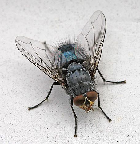 E alcuni insetti che si possono trovare a casa sono ospiti casuali dalla strada qui.