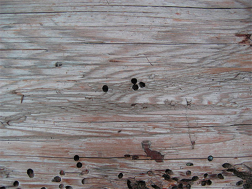 Le tracce del macinino dello scarabeo