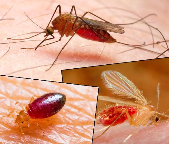 I morsi di diverse specie di insetti differiscono in modo significativo l'uno dall'altro in apparenza, e le foto qui sotto lo dimostrano chiaramente ...