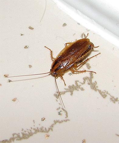 I principali costi di lavoro nella distruzione di scarafaggi con una bomba fumogena saranno collegati alla preparazione dell'appartamento per questa procedura ...