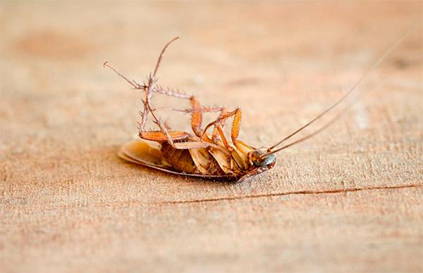 Quando si usano bombe fumogene di scarafaggi in un appartamento, è importante rispettare le norme di sicurezza pertinenti quando si lavora ...