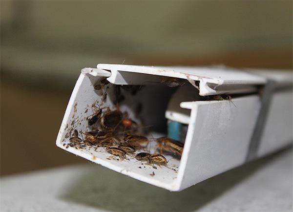 Anche in un posto così isolato gli scarafaggi non sopravviveranno ...
