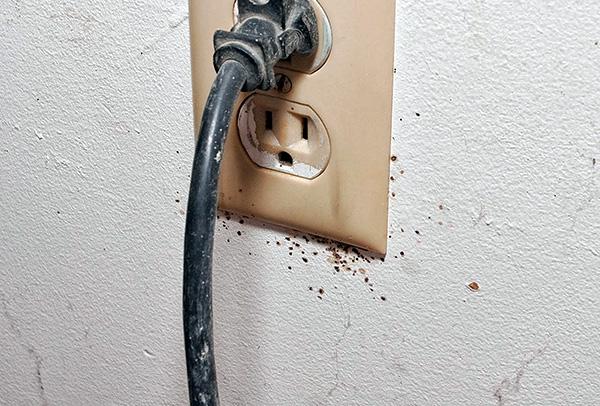 I nidi delle cimici possono essere nelle prese elettriche ...