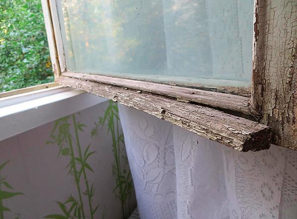 Le cimici possono entrare nell'appartamento attraverso il muro esterno dell'edificio attraverso le fessure delle vecchie finestre.