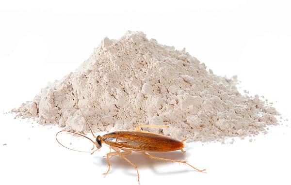 Le polveri insetticide continuano a rimanere uno dei mezzi più popolari di scarafaggi oggi - continueremo a parlare di tali preparativi e parliamo di più ...