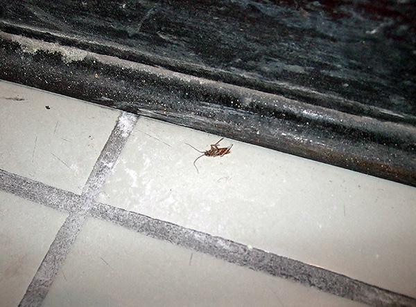 Più a lungo l'insetticida non viene rimosso dai siti di trattamento, maggiore è la probabilità che tutti gli scarafaggi lo contattino.